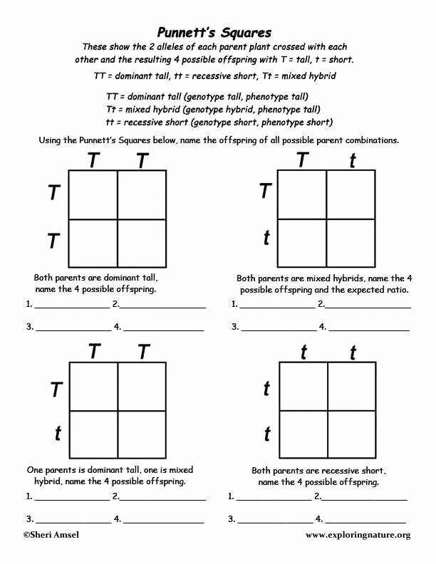 Punnett Square Practice Worksheets In 2020 With Images Biology