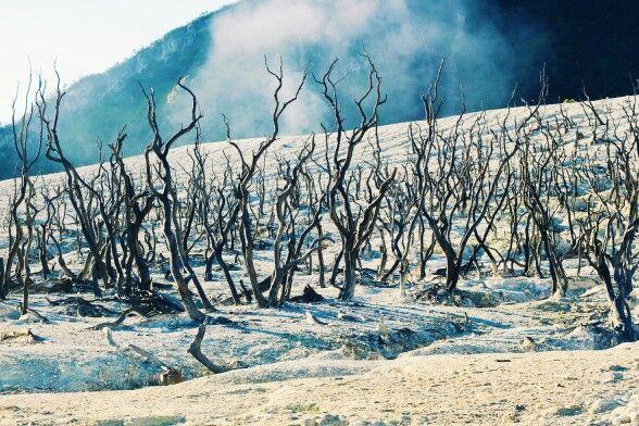 Dead Woods, Gunung Papandayan