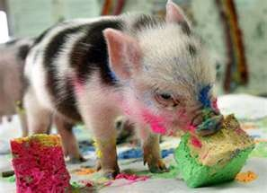 :] i have a new attachment to pigs. go figure!