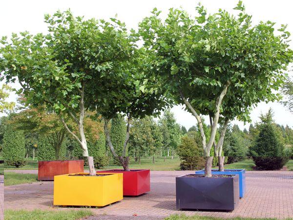 Boompje Voortuin Ten Hoven Tuinen Bomen In Bakken