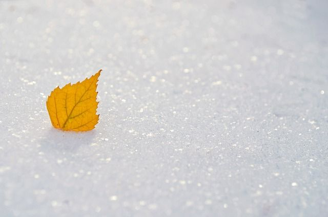 Leaf frozen in the ice