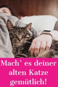 Cat Seniors: Tips for the Apartment