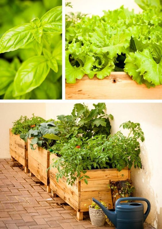Grow your own city vegetable garden - I really like the look of the boxes!!! Better than raised beds.