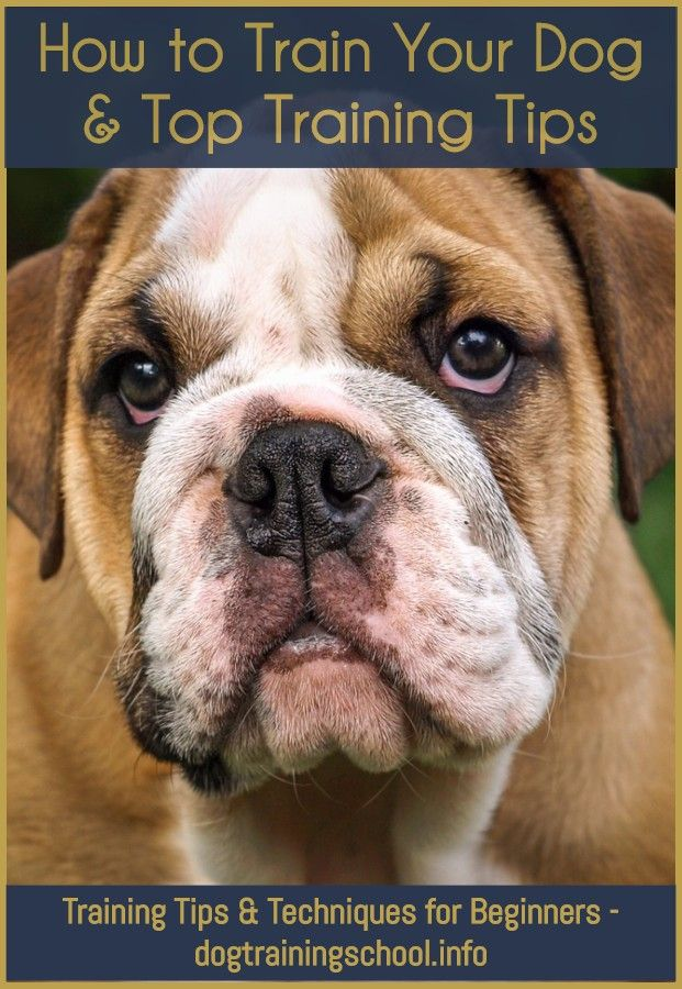 How To Get Rid Of Dog Hiccups Dog Breeds Healthiest Dog Breeds