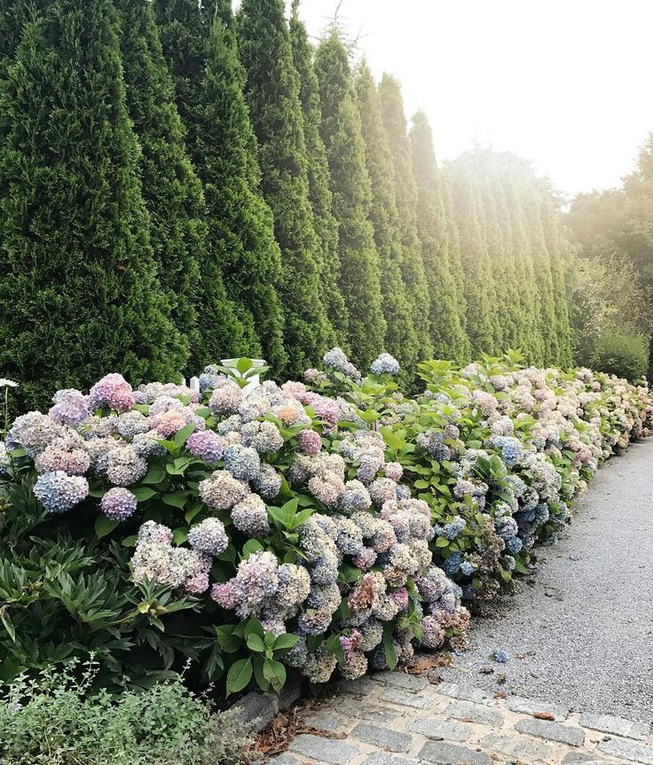 Southampton is the dreamiest, most charming place I've ever been! Every street is filled with tall trees, hydrangeas and the most gorgeous homes! I can't wait to come back someday!