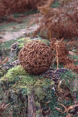 andy goldsworthy woven bracken ball