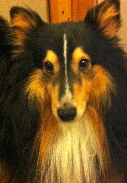 Jouko's dog is called Nemo.