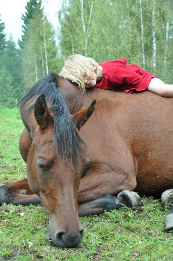 Every horse deserves at least once in their life to be loved by a little girl