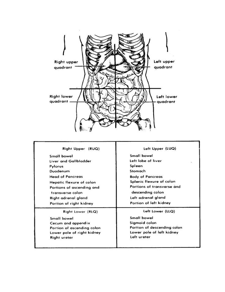 Best 25 quadrants of the abdomen ideas on pinterest health abdominal quadrants nursing care gastrointestinal and urinary systems ccuart Choice Image
