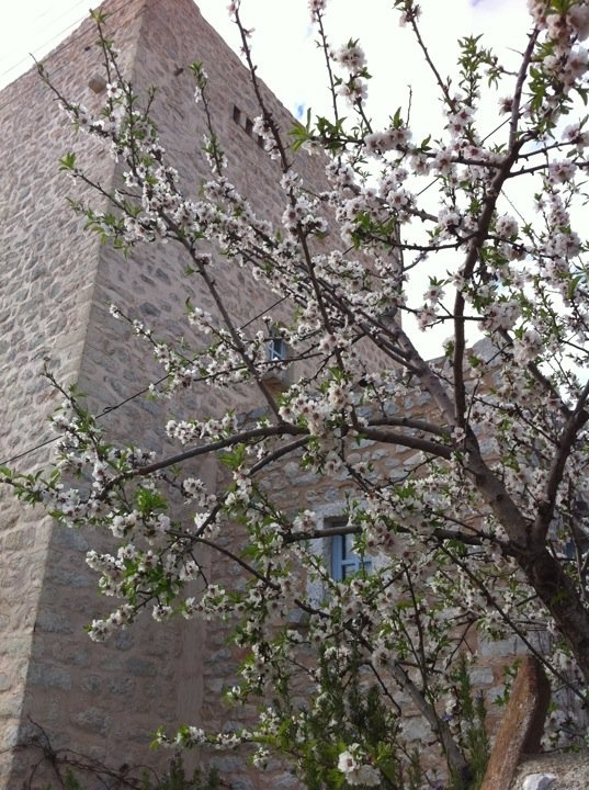 Spring blossoms in Mani