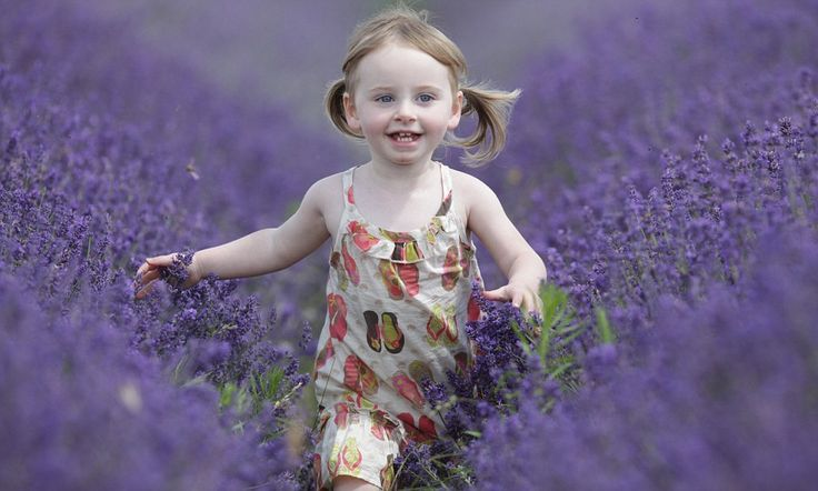 Purple rain! It may be gloomy but weeks of downpours have turned Britain's lavender fields a spectacular shade of violet
