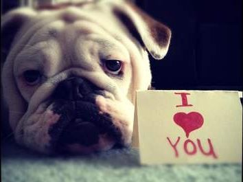 valentine bull dog image | ... of the smushy faced bulldog variety for $ 5 a cute english bulldog