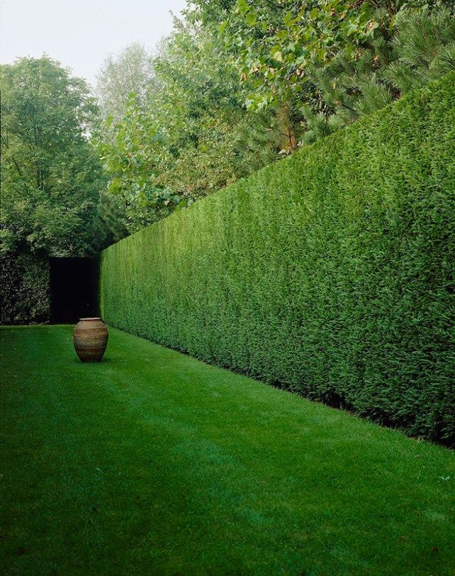 Best 20 Leylandii Hedge Ideas On Pinterest Fast Growing