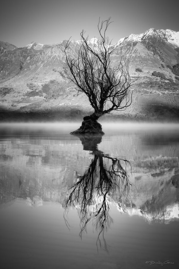 Single tree surrounded by mist rising from the pristine waters of Lake Wakatipu, New Zealand.