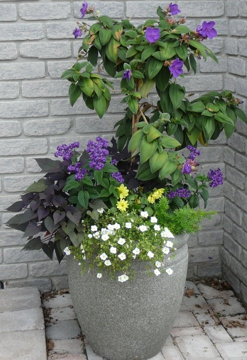 tall summer planter for front door entry my giardino pinterest front door entry door. Black Bedroom Furniture Sets. Home Design Ideas