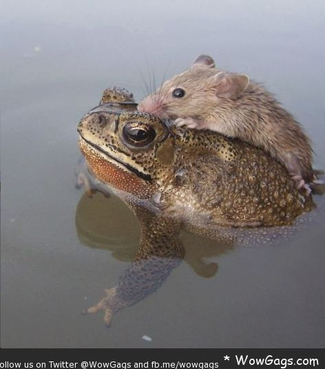 animals helping each other - photo #21