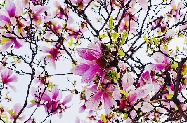 ...flowers