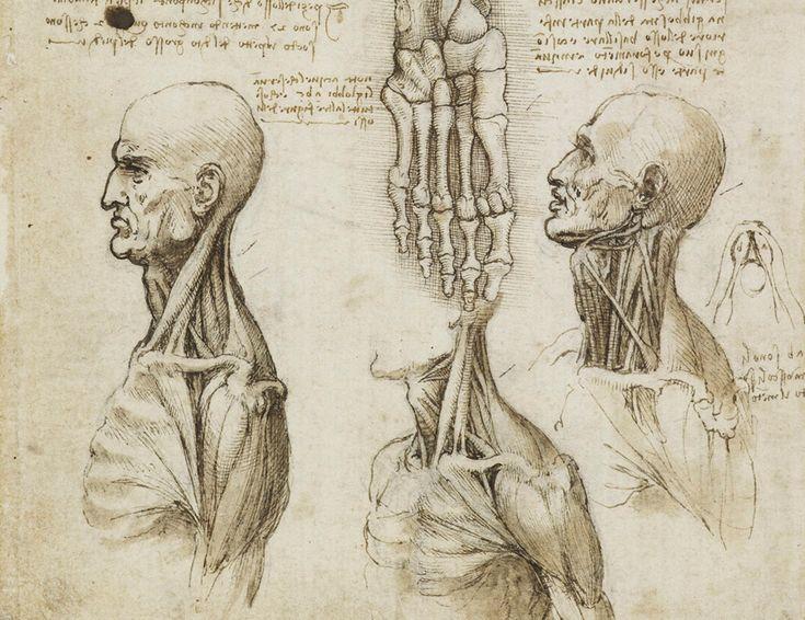 Leonardo da vinci anatomy discoveries