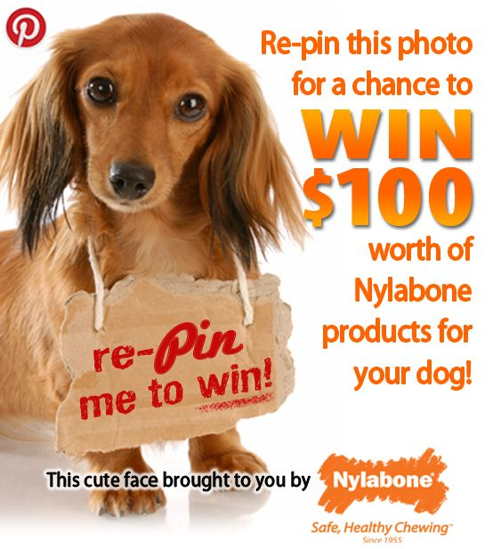 Follow #Nylabone and #Repin with #NylabonePin2Win! #Sweepstakes #Dogs www.nylabone.com/pinterest-sweepstakes.htm: Nylabonepin2Win Daisies, Sweepstak Dogs, Dogs Www Nylabon Com, Doggies, Bones, Animal Vet, Dogs Www Nylabone Com, Nylabon Pin, Dogs Love