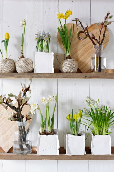 bloembollen in bolletjes touw #flowerbulbs #springflowers