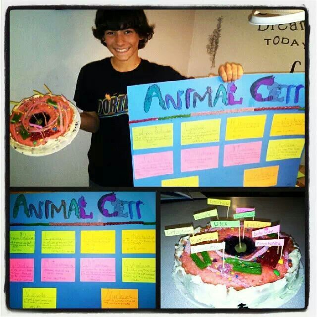 Edible animal cell science project