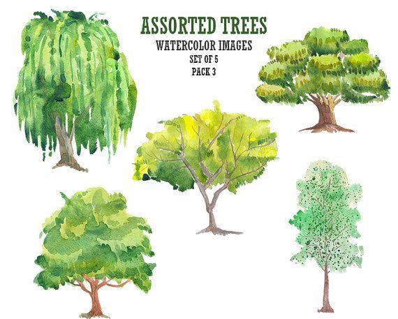 Watercolor clip art Tree clipart Floral digital image Stock image