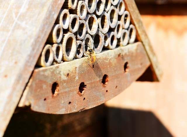 Cool Eine Mauerbine im Anflug auf ein Insektenhotel aus Holz und Bambus