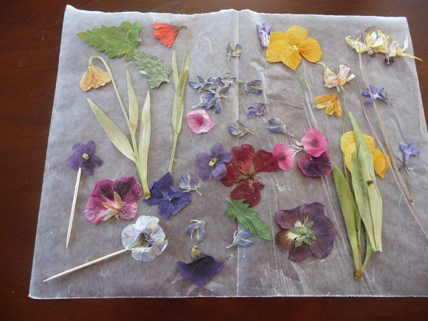 Preserving pressed flowers with clear spray paint