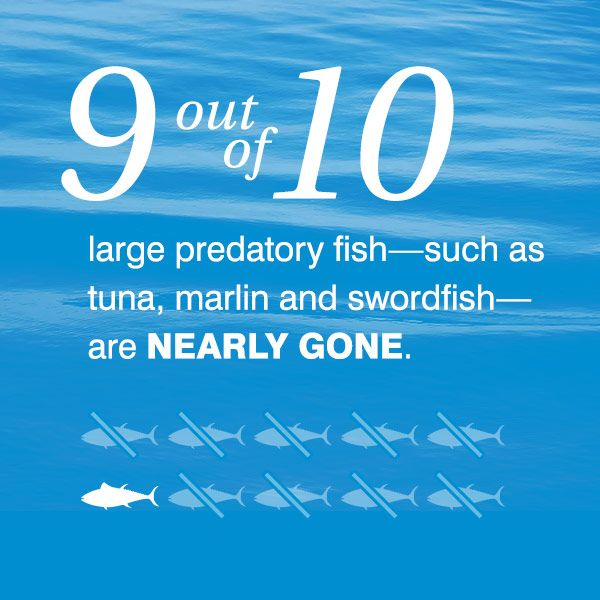 End  overfishing  21 Science  Die Ocean  Environmental Issues  Animal    Overfishing Facts