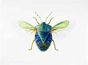 Green Stink Bug - insect, stink bug, beetle by Dinah Wells