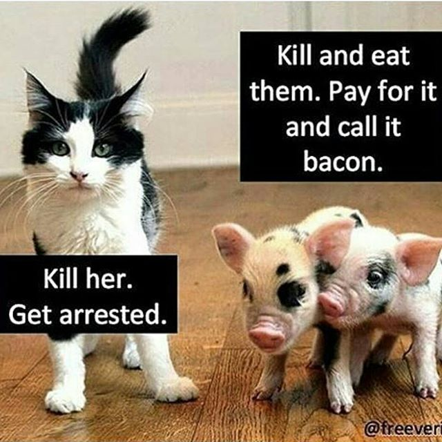 The 25 Best Animal Welfare Ideas On Pinterest Animal Rights Animal Rights Quotes And Animal Cruelty Quotes