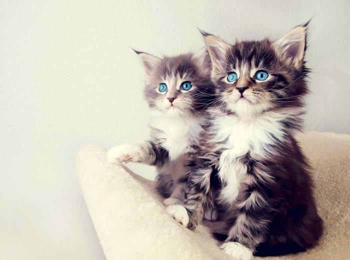 NEWS: Most Popular and Peculiar Cat Names Revealed