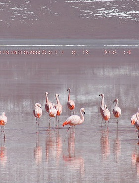 Laguna Colorada, Bolivia – Natural Beauty in South America