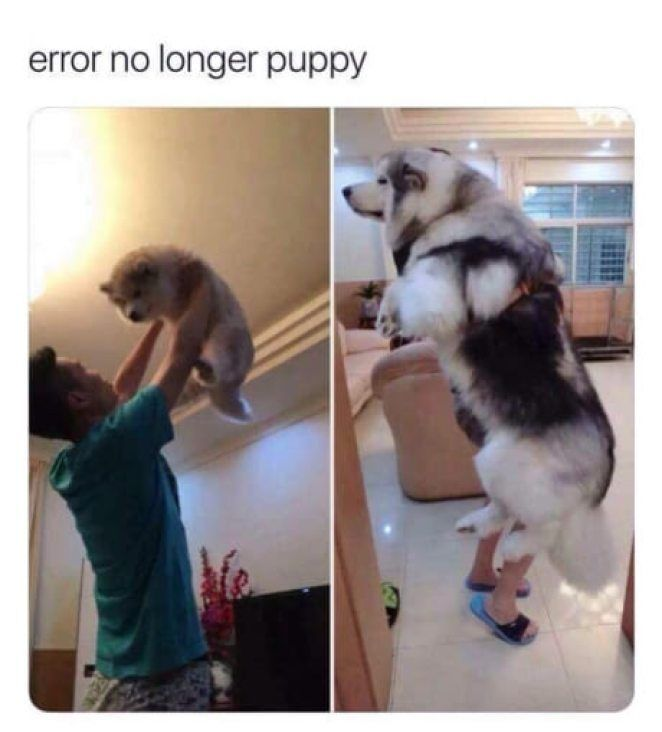 15+ funniest ANIMAL pictures of HAPPY NEW YEAR ! day