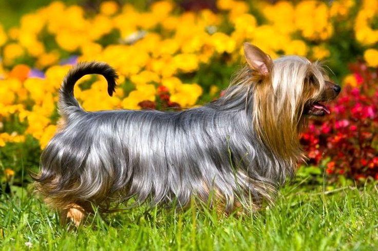 Гончая собака: выбор породы