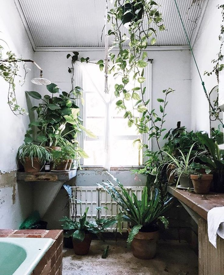 35 best BADKAMER | PLANTEN images on Pinterest | Plants, Gardens ...