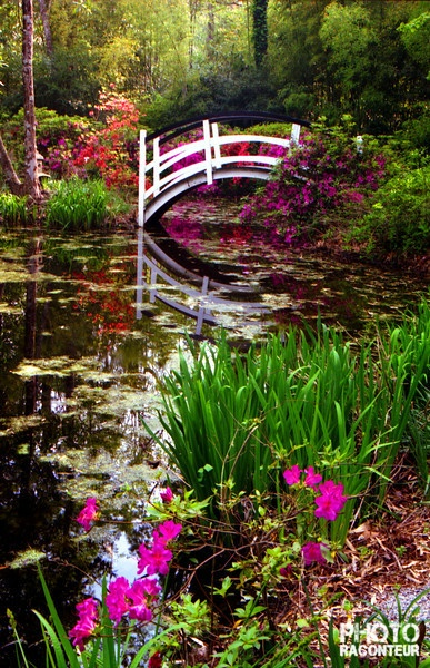 Historic Charleston SC | ... and gardens of the Magnolia Plantation in historic Charleston, SC