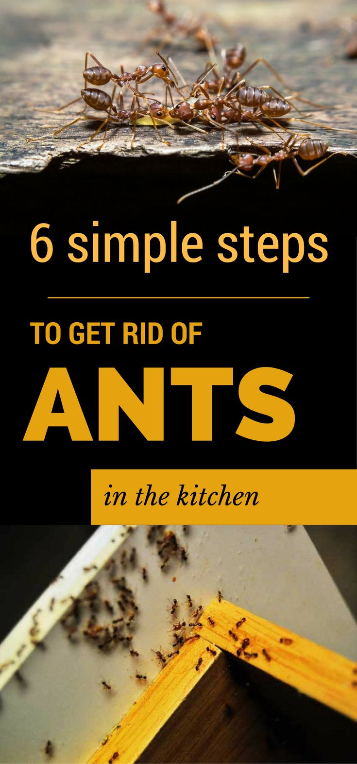 Little Black Ants In Kitchen How To Get Rid Of Little Ants In Kitchen Solution For How To For