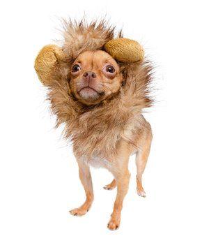 Cat & Small Dog Lion Mane