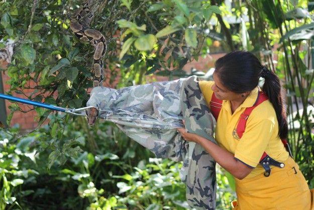Capacitación Manejo Serpientes - Instituto Clodomiro Picado - Noviembre 2012