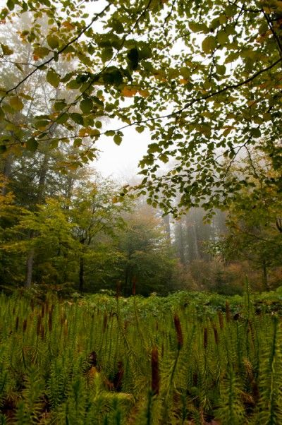 Photo Nature, Woods, Fog