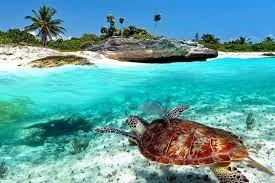 Ven a conocer las maravillas de Playa del Carmen... #mexico #caribe #playa #playadelcarmen #rivieramaya #beach #ilovemexico #memoriestogo #traveling #caribemexicano