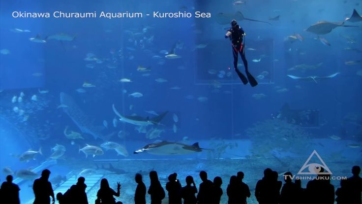 DYNAMIC    ENCOUNTER    WITH     WHALE     SHARK