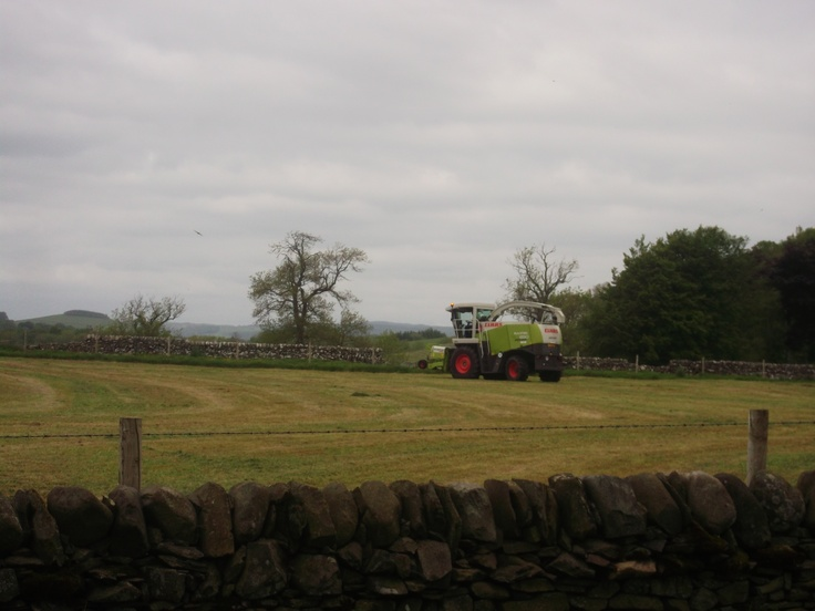First cut of silage a week late, red kite following the cutter for carrion swoops