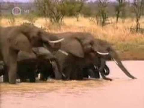 állatkert a hátizsákban magyarul - YouTube