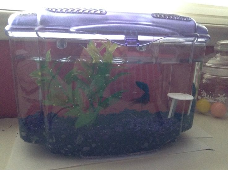 The New Addition to my Fam: a Betta Fish