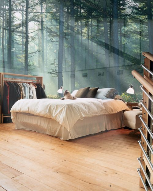 Window Walls for a home in the woods! yes, please :)
