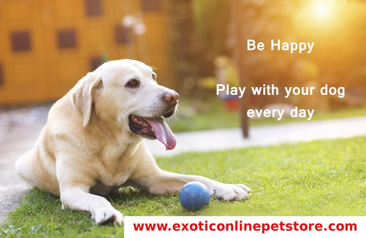 """Be Happy Play with your dog everyday."" #labrador #playing #happy #dogs http://www.exoticonlinepetstore.com/"