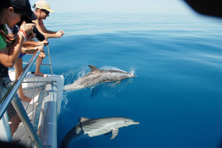 Dolphin watching in Hervey Bay with Blue Dolphin Marine Tours