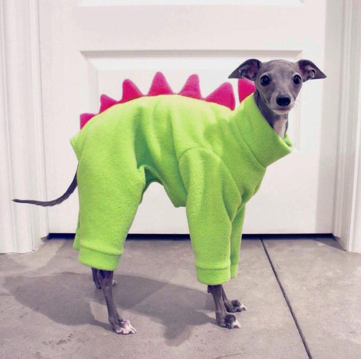 The cutest dinosaur in existence #Music #IndieArtist #Chicago